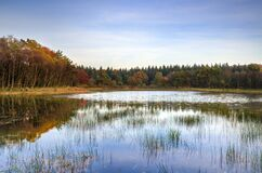 Shallow lake and surrounding forest Stock Photos