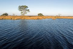 Shallow lake with trees in Drenthe Stock Image