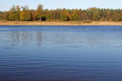 Shallow lake and trees in Drenthe Stock Images