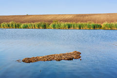 Shallow lake. Water in summer daylight Stock Images