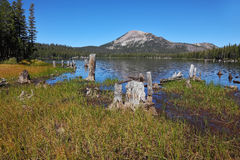 Shallow lakes, surrounded by stumps and snags Royalty Free Stock Photography