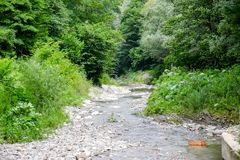 Shallow mountain river with trees on the shore. Landscape of the river.  Stock Images
