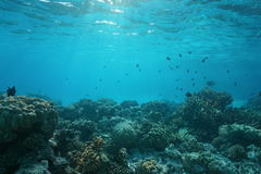 Shallow ocean floor with coral reef and fish Stock Image
