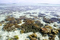 Shallow Open Sea and Corals Royalty Free Stock Image