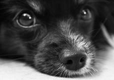 Shallow Photo of Black Dog Stock Images
