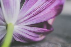 Shallow Photography of Purple Petaled Flower Royalty Free Stock Photos