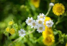 Shallow Photography Of White Flowers royalty free stock photography