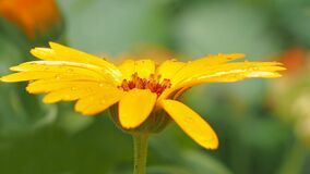 Shallow Photography of Yellow Petaled Flowers Royalty Free Stock Photography