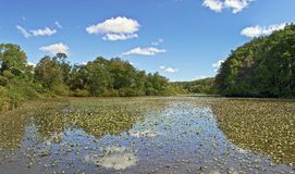 Shallow Pond Panorama Royalty Free Stock Images
