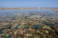 Shallow Reef Stock Images