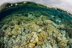 Shallow Reef in Indonesia Stock Photography