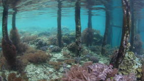 Shallow Reef Under Pier in Raja Ampat. Corals, giant clams, and other life grows around a wooden pier in Raja Ampat, Indonesia. This remote region is known as stock footage