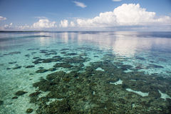 Shallow Reef in Wakatobi National Park. A shallow coral reef grows along the edge of a remote island in Wakatobi National Park, Indonesia. This tropical region Stock Photography