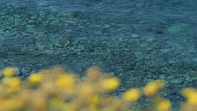 Shallow Sea Coast Water and Yellow Flowers Slow Motion. Medium long high angle high dynamic range shallow depth of field tracking slider shot of shallow coastal stock video footage