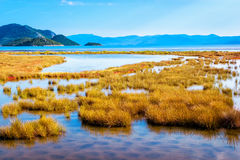 Shallow sea that connects with swamp by the sea Stock Image