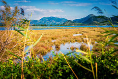 Shallow sea that connects with swamp by the sea Royalty Free Stock Photos