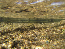 Shallow Stream. Pure, clear and clean water of a small, shallow, Wisconsin trout stream Stock Photo