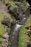 Mountain stream in the Antisana Ecological Reserve, Ecuador Stock Image