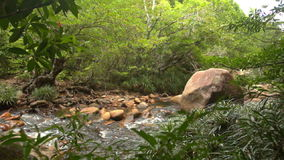 Shallow Stream with Stony Bottom Green Banks in Park stock video footage