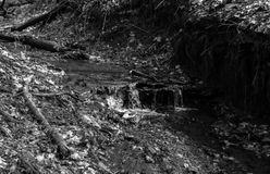 Shallow stream in the thicket of the forest. Stock Photo