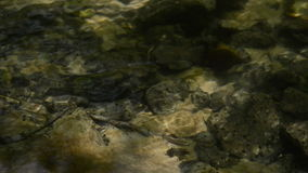 Shallow stream. Water flow on sunny day. stock footage