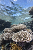 Shallow tropical coral reef Stock Image