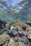 Shallow tropical coral reef Stock Photography