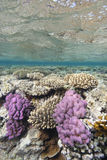 Shallow Tropical Coral Reef Stock Photo