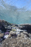 Shallow tropical coral reef Royalty Free Stock Image
