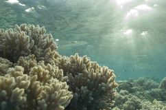 Shallow tropical coral reef, natural light. Royalty Free Stock Photography