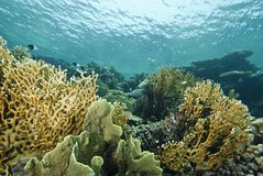 Shallow underwater reefscape. Royalty Free Stock Images