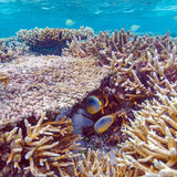 Shallow Water Coral Reef Royalty Free Stock Photos
