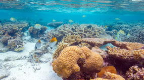 Shallow Water Coral Reef Stock Photography