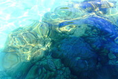 Shallow water corals in Tropical climate Stock Photography