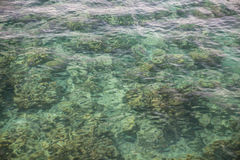 Shallow Water Covering Reef Stock Image