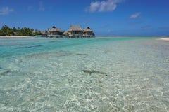 Shallow water of lagoon bungalows French Polynesia. Shallow water of a lagoon with tropical overwater bungalows, Tikehau atoll, Tuamotu archipelago, French royalty free stock photography