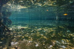 Shallow water in the mangrove with shoal of fish Royalty Free Stock Image