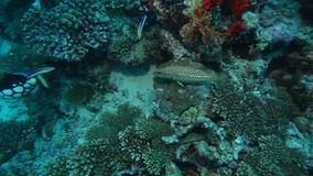 Shallow Water with Sealife of Coral Reef. Maldives stock video footage