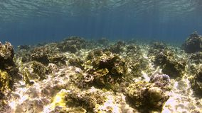Shallow waters of a coral reef stock video footage