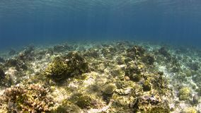 Shallow waters of a coral reef stock video