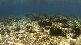 Shallow waters of a coral reef. 4k footage stock video footage