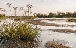 Shallowing dei fiumi e delle piante del cespuglio del fiume Fotografie Stock Libere da Diritti