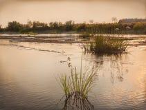 Shallowing dei fiumi e delle piante del cespuglio del fiume Fotografia Stock Libera da Diritti