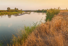 Shallowing dei fiumi e delle piante del cespuglio del fiume Fotografia Stock