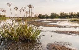 Shallowing of rivers and river bush plants Royalty Free Stock Images