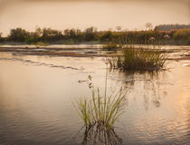 Shallowing of rivers and river bush plants Royalty Free Stock Photo
