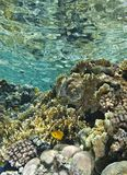 The shallows of a tropical coral reef. Royalty Free Stock Photography
