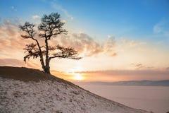 Shaman tree Royalty Free Stock Images