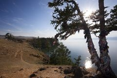 Shaman tree in Baikal lake Stock Image