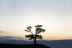 Shamanic tree Stock Images